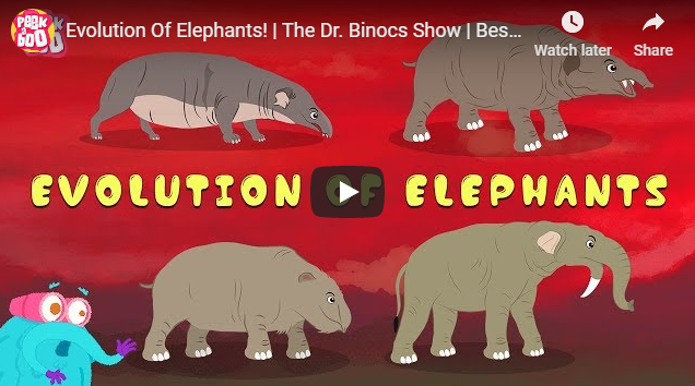 Evolution Of Elephants!