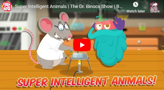 [영어동영상] Super Intelligent Animals