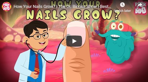 [영어동영상] How Your Nails Grow?