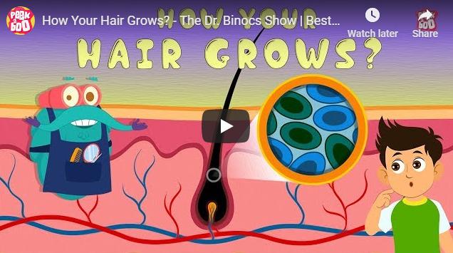[영어동영상] How Your Hair Grows? - The Dr. Binocs Show
