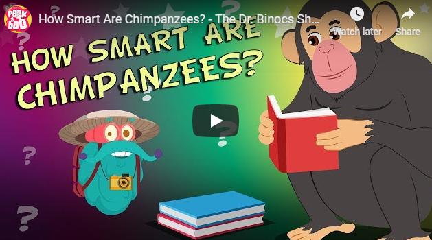 [영어동영상]How Smart Are Chimpanzees?