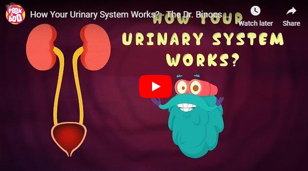 [영어동영상]How Your Urinary System Works?