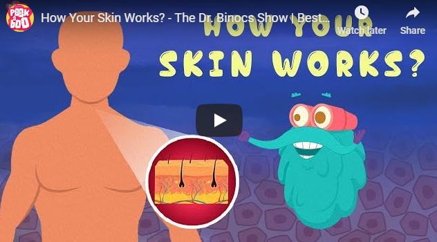 [영어동영상]How Your Skin Works?