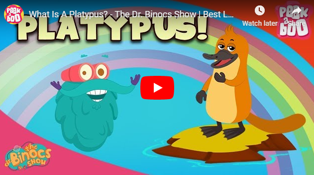 [영어동영상]What Is A Platypus?